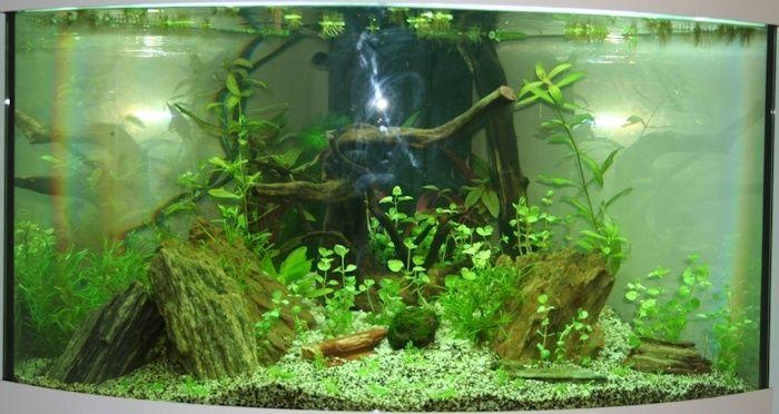 SeeNHiA - Aquarium d'angle 190L - Page 2 T190_j15