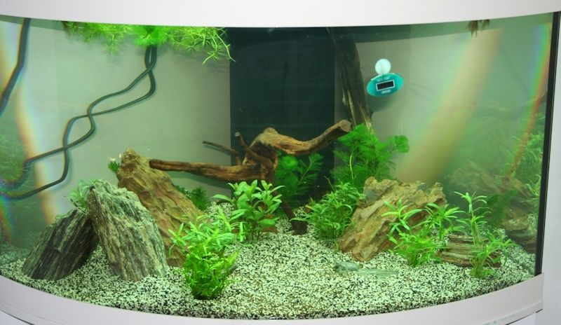SeeNHiA - Aquarium d'angle 190L T190_m12