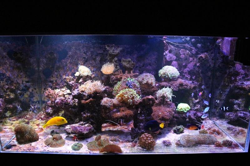 Mon 600 Litres et mon projet Fishroom Img_1510