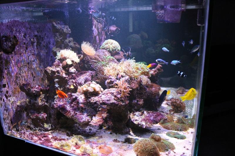 Mon 600 Litres et mon projet Fishroom Img_1511