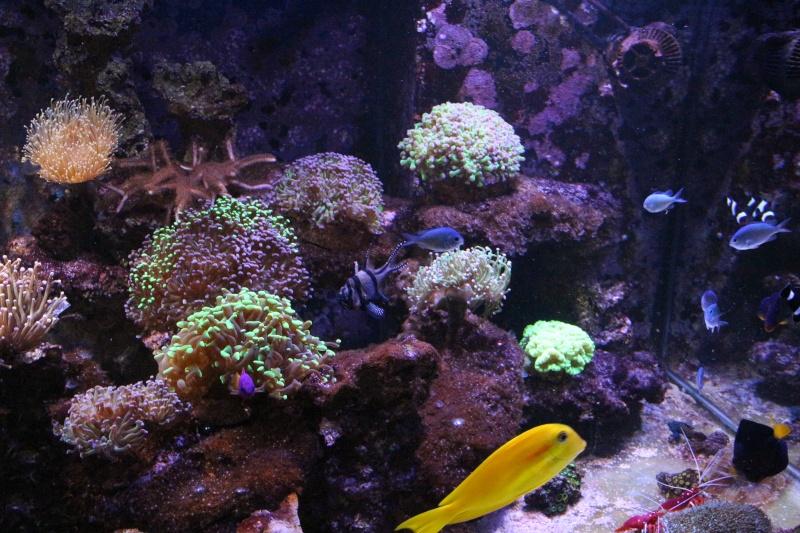 Mon 600 Litres et mon projet Fishroom Img_1512