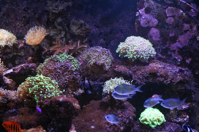 Mon 600 Litres et mon projet Fishroom Img_1513