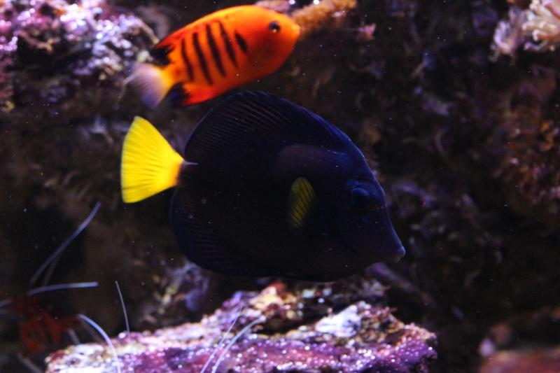 Mon 600 Litres et mon projet Fishroom Img_1516