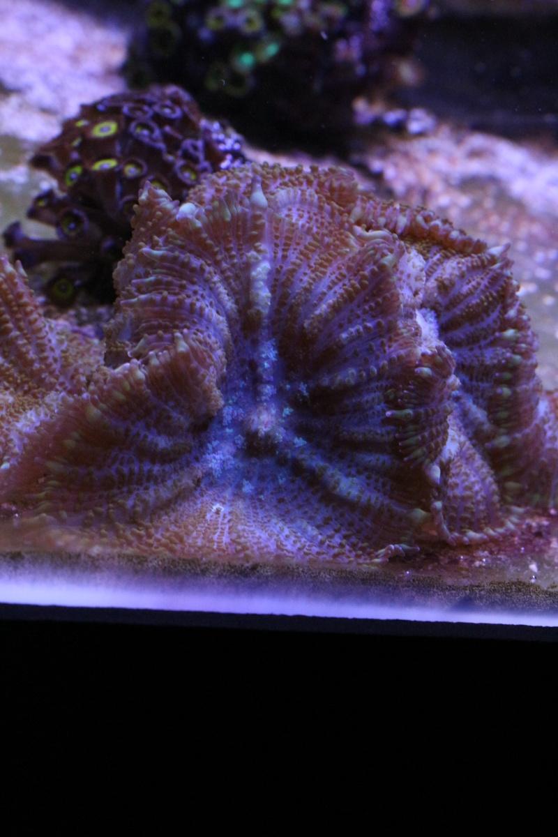 Mon 600 Litres et mon projet Fishroom Img_1518