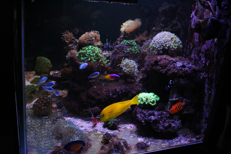 Mon 600 Litres et mon projet Fishroom Img_1610