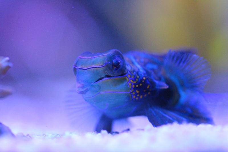 Mon 600 Litres et mon projet Fishroom Img_4221