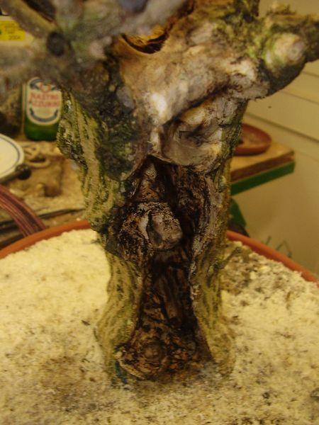W.I.P. Hibiscus Syriacus scopa... a tronco cavo - Pagina 2 Appunt14