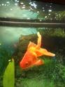 Caractéristiques de mon aquarium et de mes poissons Photo_15