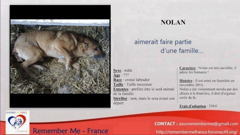 ** NOLAN ** - Mâle taille moyenne très sociable né en 2008 - ( PASCANI ) - adopté par Nadine (Belgique) - DECEDE  A_l_ad12