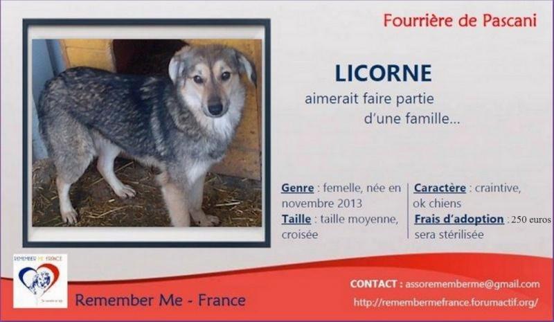 LICORNE, femelle taille petite à moyenne née en 2013 (Pascani) Rycemm10