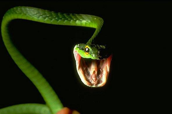 [Jeu] Association d'images - Page 20 Reptil10