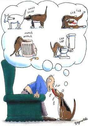 Histoires drôles sur les chiens 601610