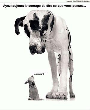 Histoires drôles sur les chiens 601710