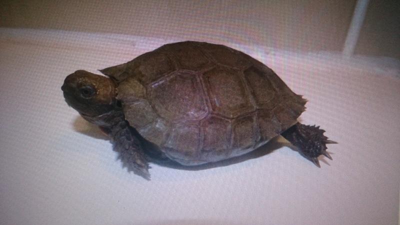 tortue trouvée Dsc_0518