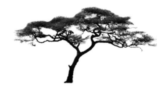 Bonsai pepper tree Scherm10