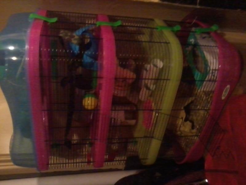 HELP Choix d'une nouvelle cage. 2015-010