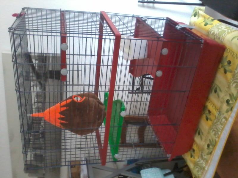 HELP Choix d'une nouvelle cage. 2015-011
