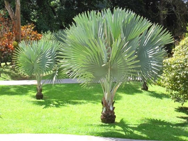 (972) Le jardin botanique de Balata - Martinique Img_2310