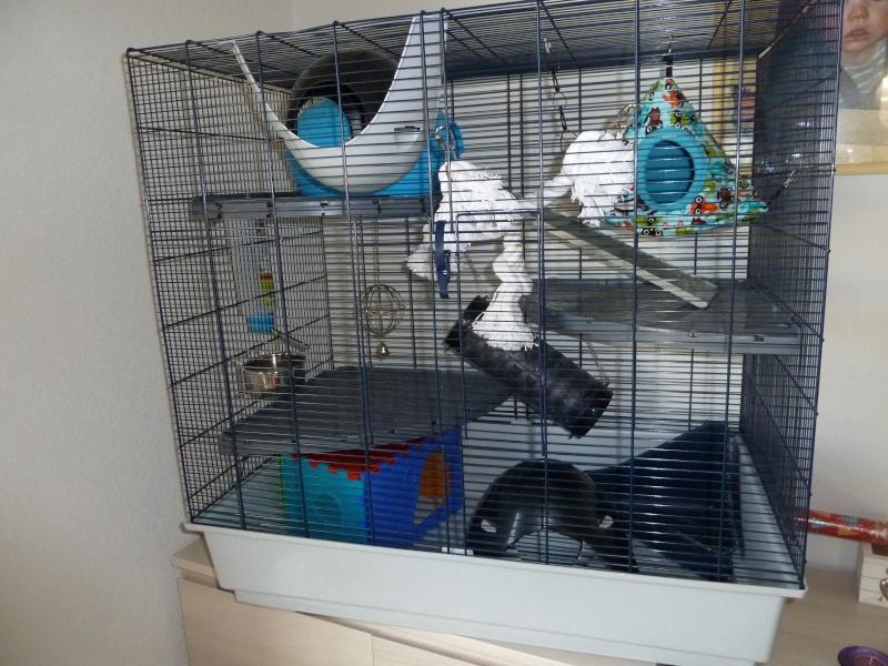 photos de ma cage P1030510