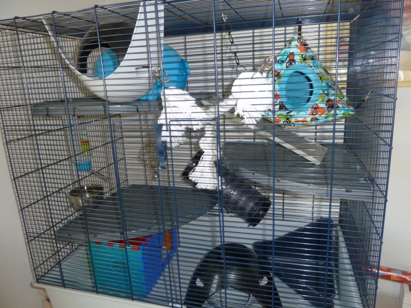 photos de ma cage P1030512