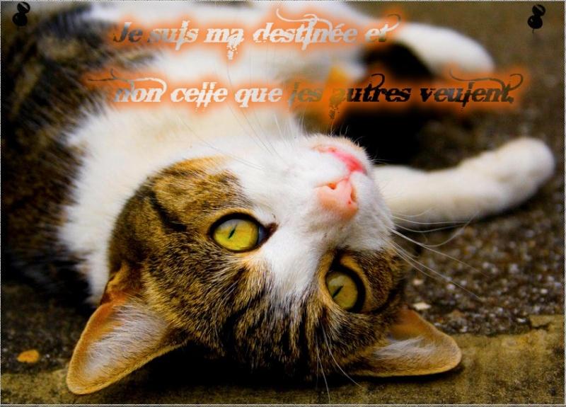 Mistyy  Cat_1_11