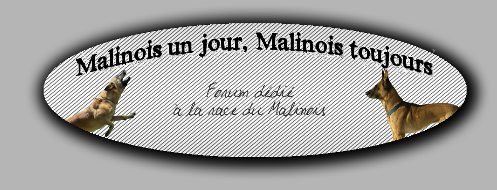Malinois un jour, Malinois toujours