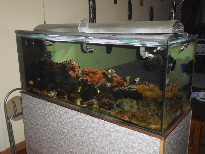 débutant à qui on lègue un aquarium de 600L   Dsci0212