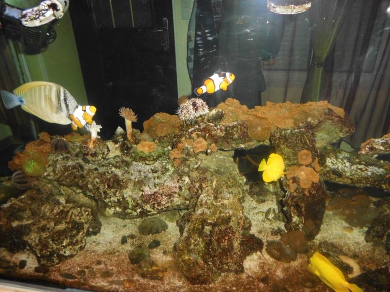 débutant à qui on lègue un aquarium de 600L   Dsci0213