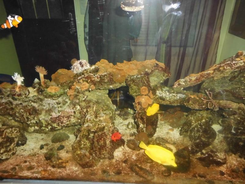 débutant à qui on lègue un aquarium de 600L   Dsci0214