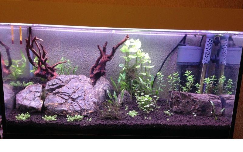 Aqua 60 cm Plante10