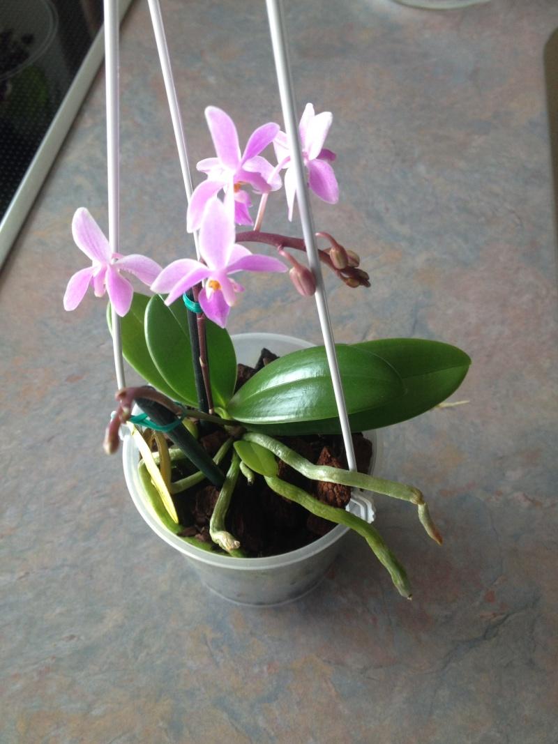 Münchner Orchideenausstellung! - Seite 2 Equest11