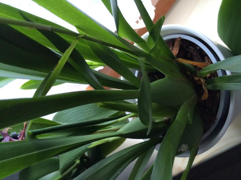 Orchidee bestimmen Img_0616
