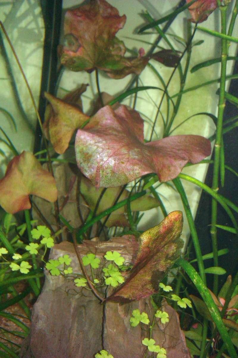 Refaire mon aquarium sans faire de bêtises... Imag0714
