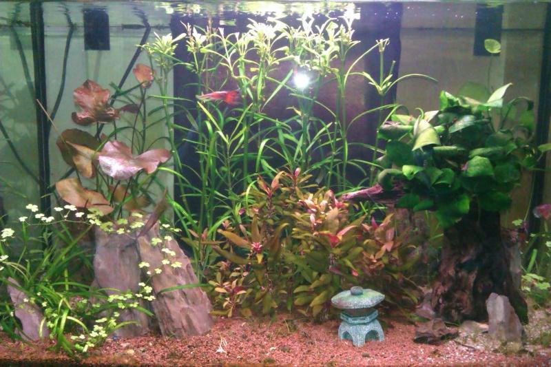 Refaire mon aquarium sans faire de bêtises... Imag0723