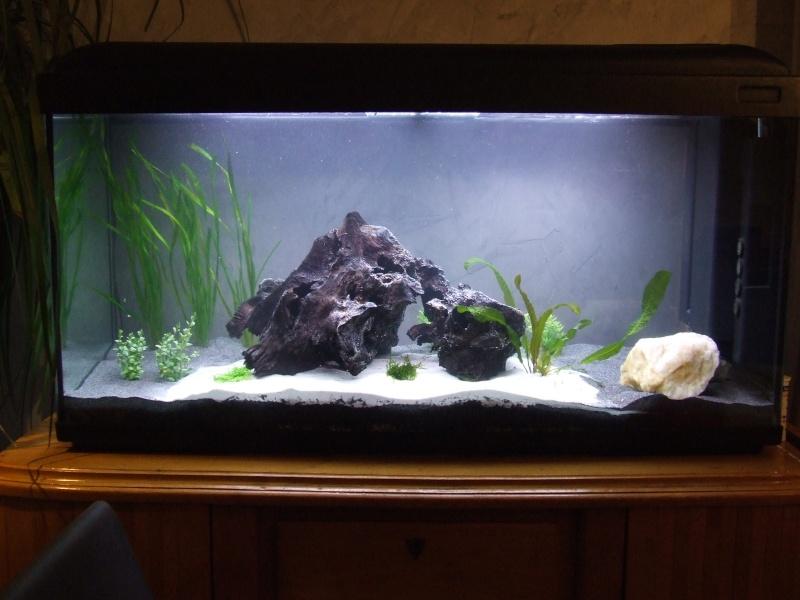 Projet, aquarium 300 Litres  - Page 3 Dscf7418