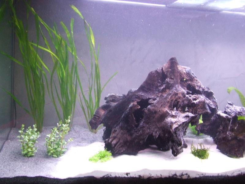 Projet, aquarium 300 Litres  - Page 3 Dscf7420