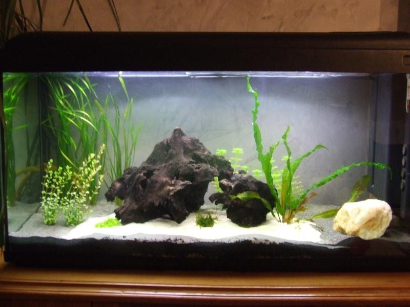Projet, aquarium 300 Litres  - Page 3 Dscf7422