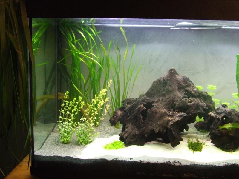 Projet, aquarium 300 Litres  - Page 3 Dscf7424