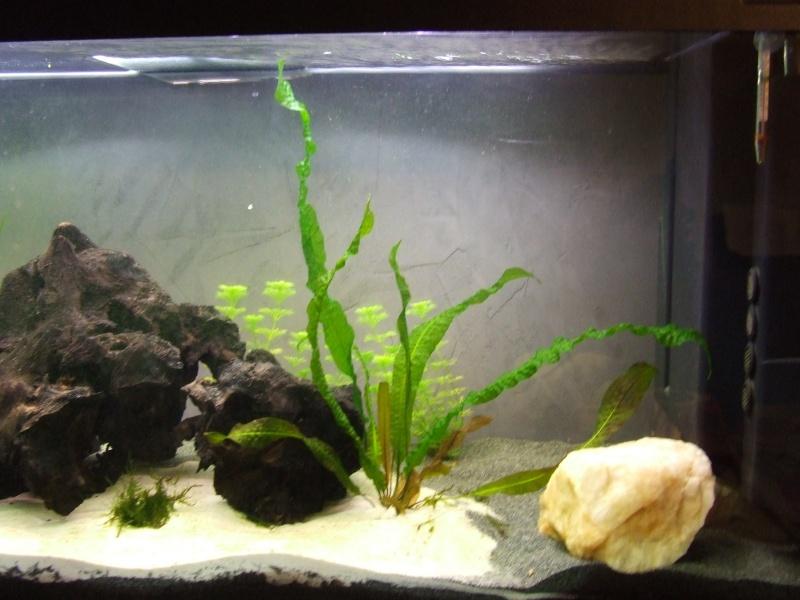 Projet, aquarium 300 Litres  - Page 3 Dscf7425