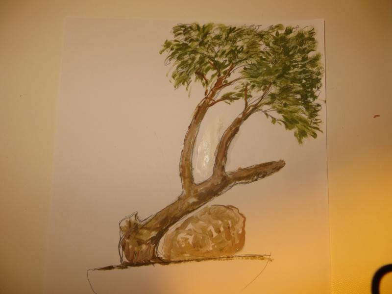 juniperus comunis da vivaio Img_3316