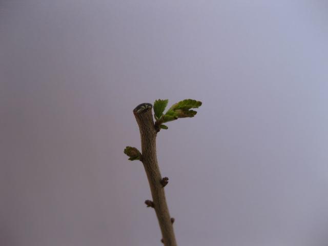 E' primavera... 00211