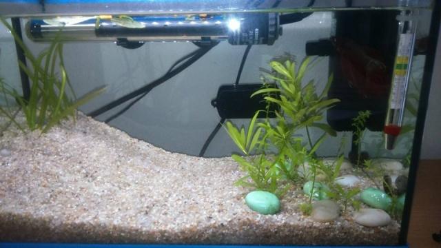 Aquarium 15L - Page 3 10669910