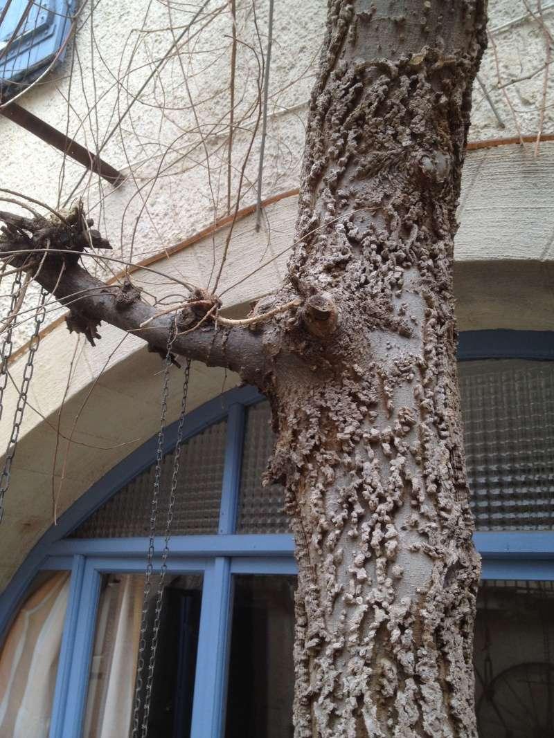 L'arbre aux tamos Img_1611