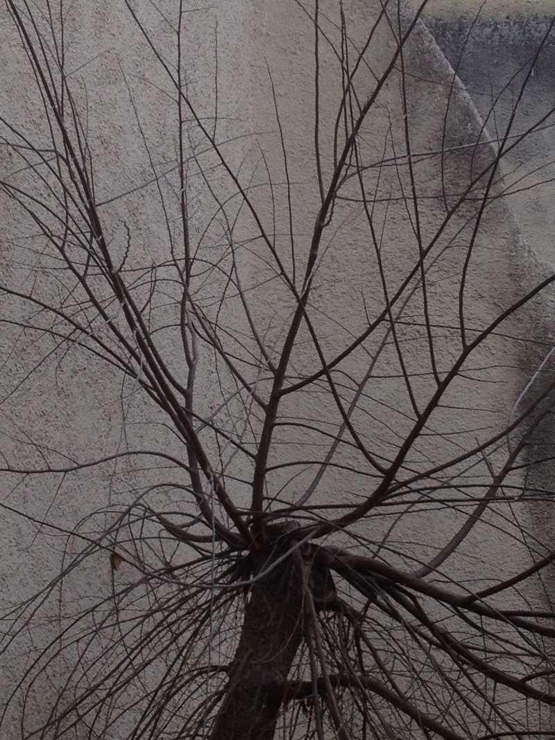 L'arbre aux tamos Img_1612