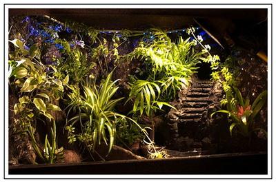Tuto : Terrarium en bois planté c'est possible Terra_11