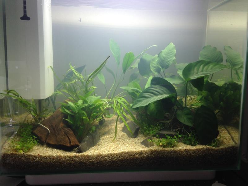 Mon premier aquarium de 40l - Page 2 Aqua_111