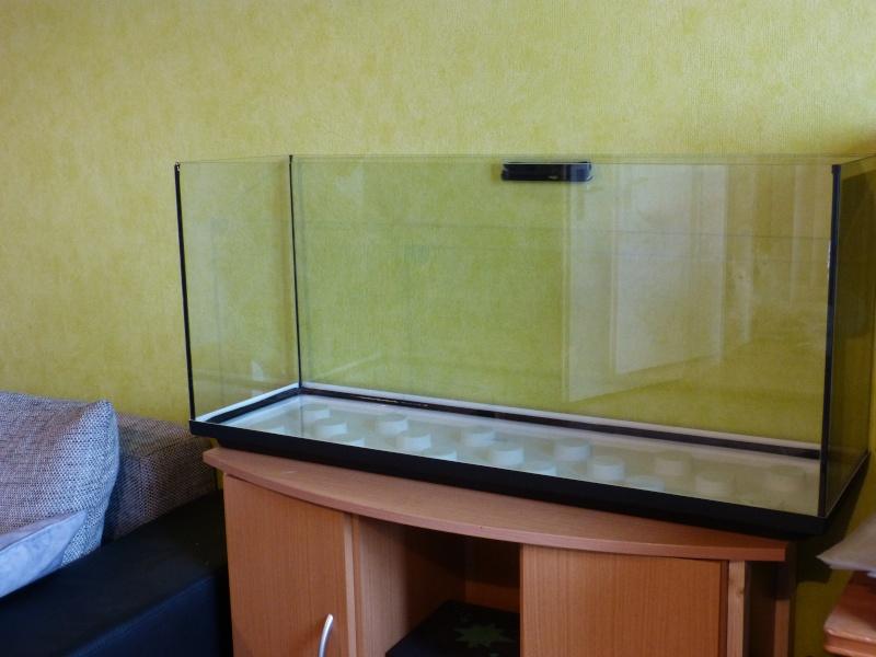 Premier aquarium et pleins de questions ;) P1020315