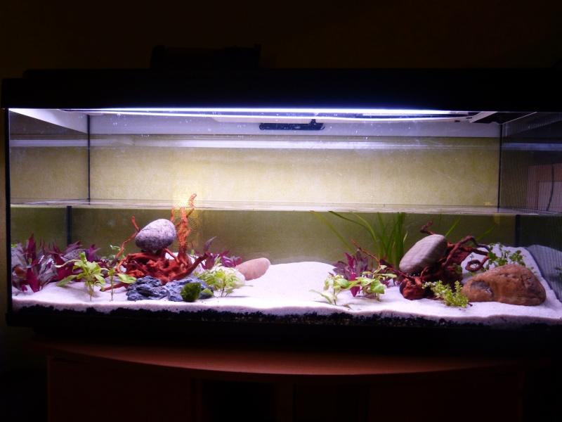 Premier aquarium et pleins de questions ;) P1020317