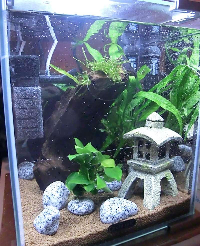 Questions avant de débuter mon aquarium... Cimg1010