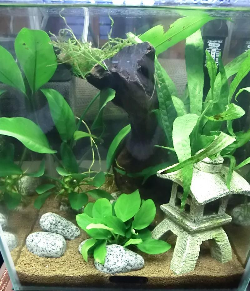 Questions avant de débuter mon aquarium... Cimg1011